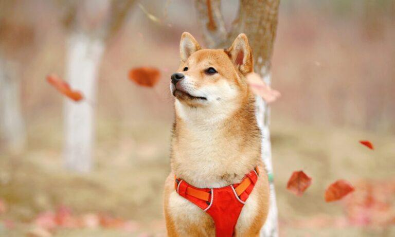 Dogecoin Price Analysis: 7 May – Bitcoin Nieuws | Crypto ...
